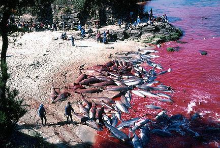 marine mammals in captivity, seaworld sucks, empty the tanks, orcas in captivity, taiji dolphin slaughter