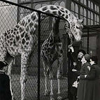 animals for clothing, animals for food, animal testing, animals as pets, animals in zoos, seaworld