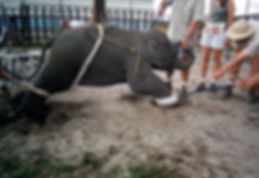 Zoo ethics, are zoos good or bad, circus animal abuse, hunting ranches, animal captivity