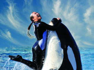 Top 10 Things You Probably Don't Know About SeaWorld