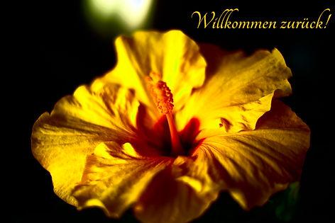 Blume Willkommen zurück.jpg