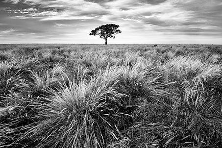 Tree, EVM.jpg