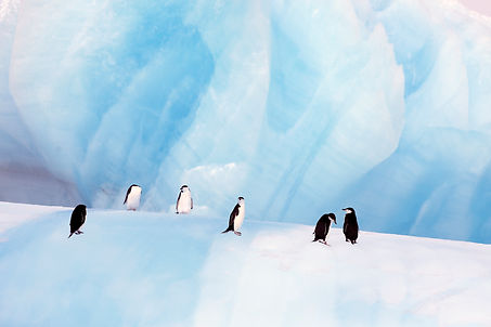 Antartica, Penguins, LG