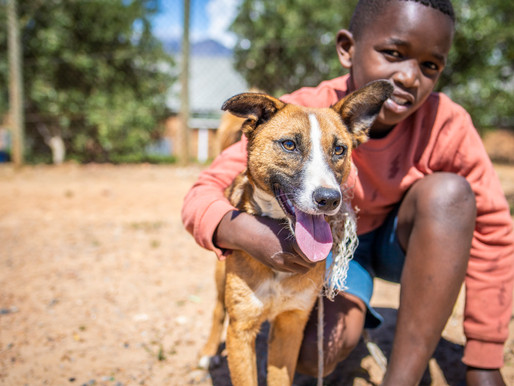 Nonprofit Photography: Animal Welfare Society of Stellenbosch