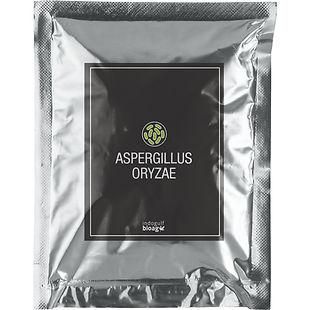 Aspergillus-Oryzae-1.jpg