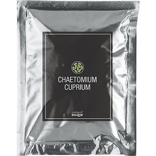 Chaetomium-cuprium-1.jpg