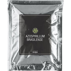 Azospirillum-brasilense-1.jpg