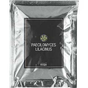 PAECILOMYCES-LILACINUS.jpg