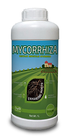 Mycorriza.png