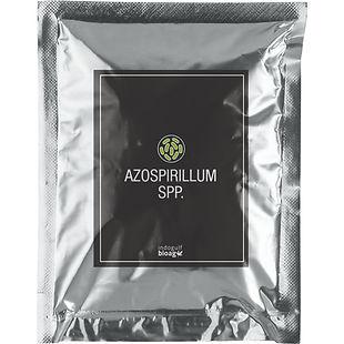 Azospirillum-Spp-1.jpg