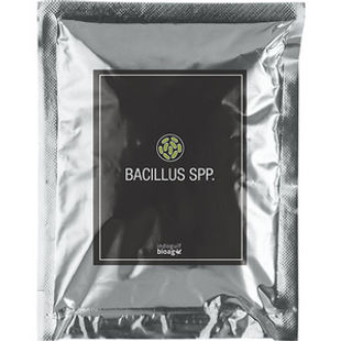 Bacillus-spp1.jpg