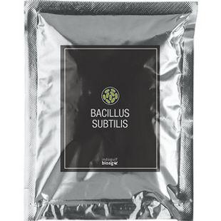 Bacillus-subtilis-1.jpg