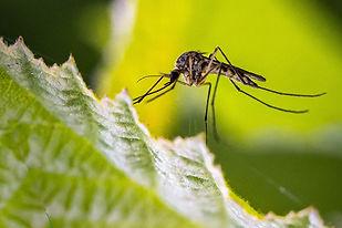 sp-mosquito-larvicide-treatment.jpg
