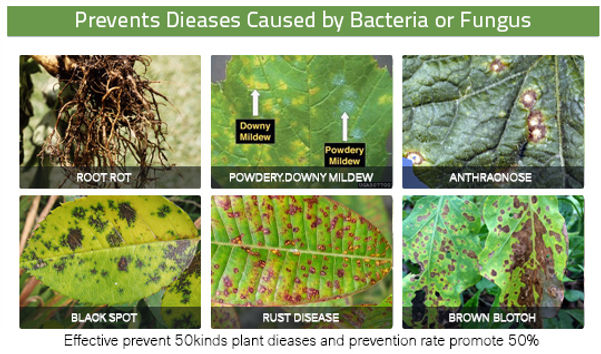 Prevents-Dieases-Caused-by-Bacteria-or-F