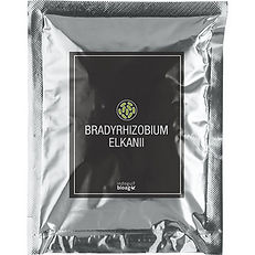 Bradyrhizobium-elkanii-1.jpg