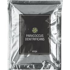 Paracoccus-Denitrificans-1.jpg