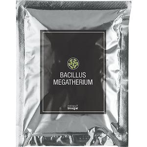 Acetobacter-Xylinum-1.jpg