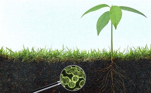 Real-farmers-grow-soil-Not-Crops.jpg