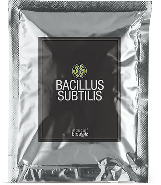BROWN-SPOT-Bacillus-subtilis.jpg