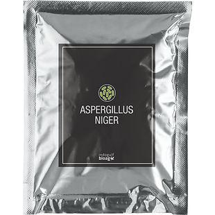 Aspergillus-Niger-1.jpg