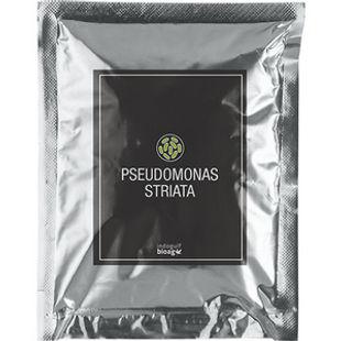 Pseudomonas-striata1.jpg