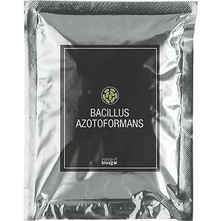 Bacillus-Azotoformans-1.jpg