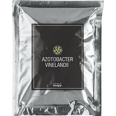Azotobacter-vinelandii-1.jpg