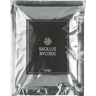 Bacillus-Mycoids-1.jpg