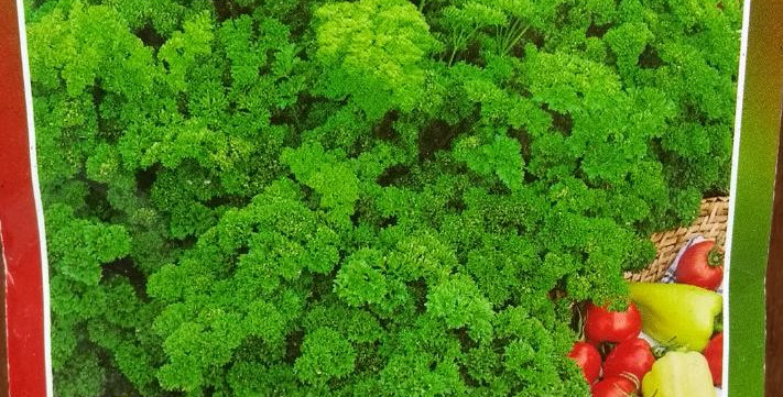 Perejil Rizado Verde Oscuro