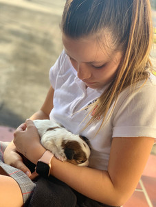 Snugly Puppy