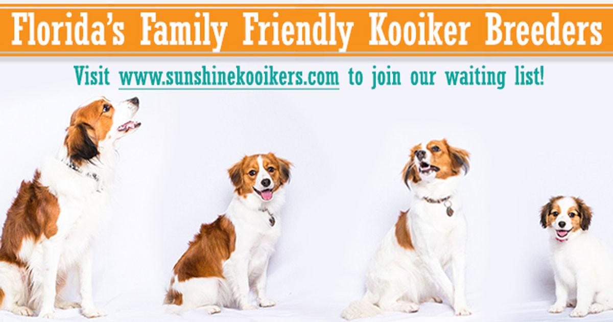 Florida Breeders of Kooikerhondje (Kooiker) Dogs