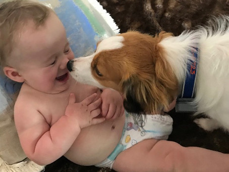 Socializing Your Puppies