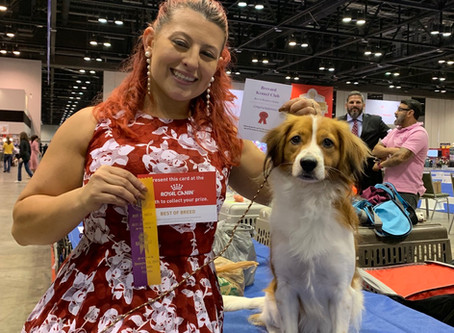 Toby Takes Best of Breed