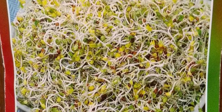 Semillas de Brócoli para Germinados (Sin tratamiento)