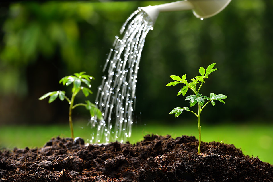 riego-huerto-plantas.jpg