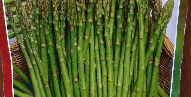 Semillas de Espárrago Verde