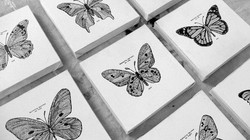 Butterfly Specimens (detail)