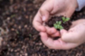 seedlings-3448883_1920.jpg