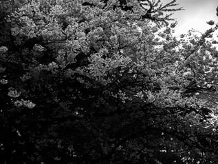 corona outdoor 2-21.jpg