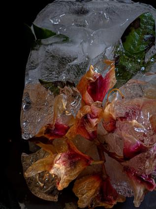Frozen flower group 1-5.jpg