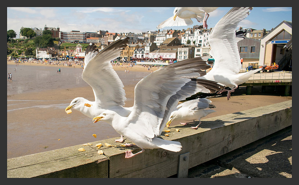 Seagulls swoop on some chips in Scarborough, North Yorkshire. (Des Green/Getty Images/iStockphoto)