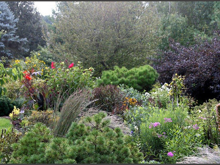 Life lessons from gardening with Judith Fetterley