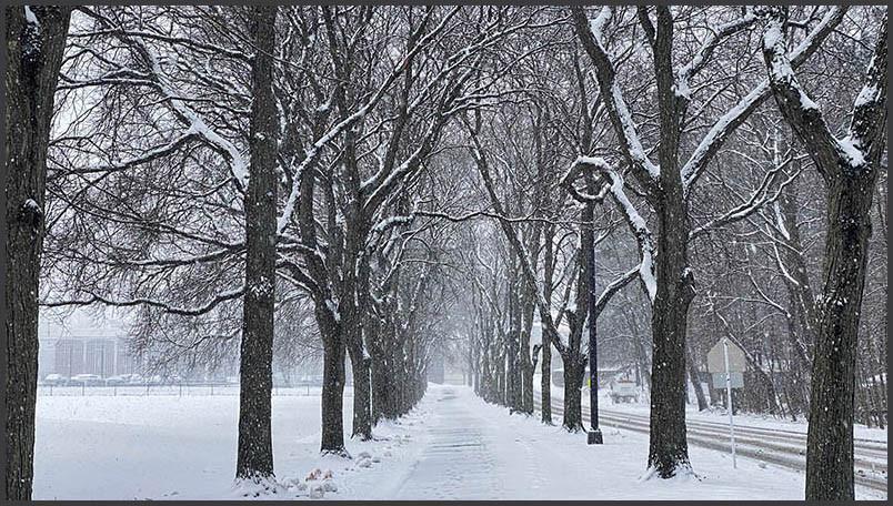 The walking path at the University at Albany