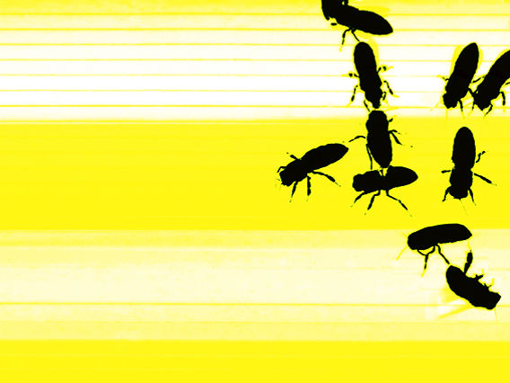 Visuel Yellow & Bees.jpg