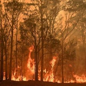 #PraxisExplica: Se incendia Australia y esto es lo que tú puedes hacer