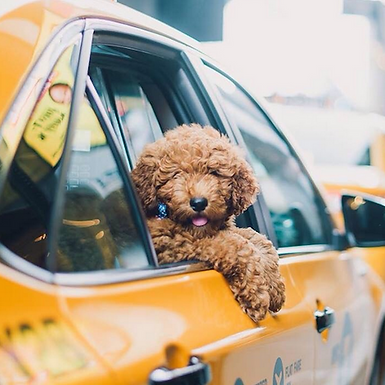 Paws Aboard - Taxi