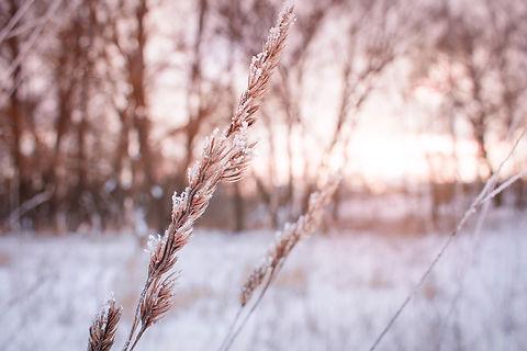 Canva - winter.jpg