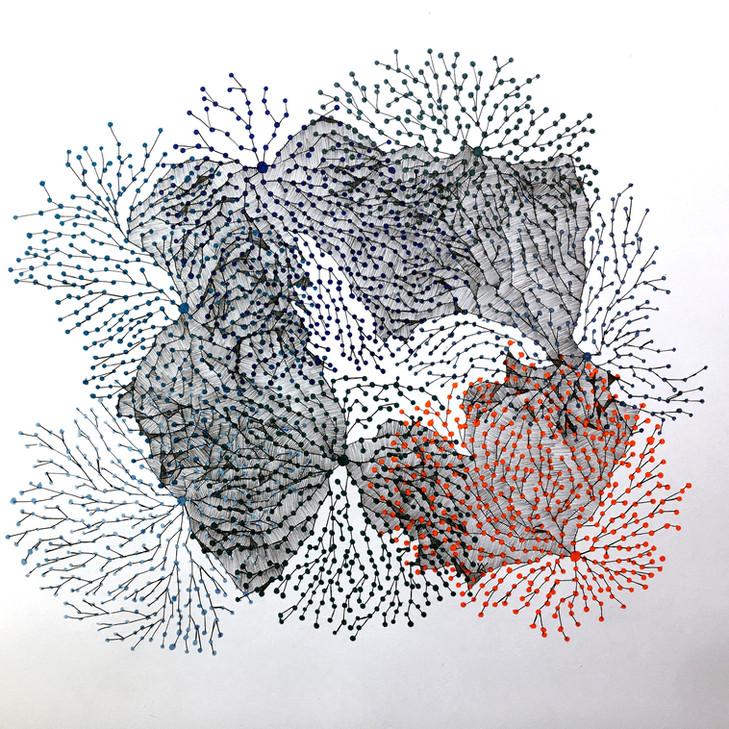 mycelium network