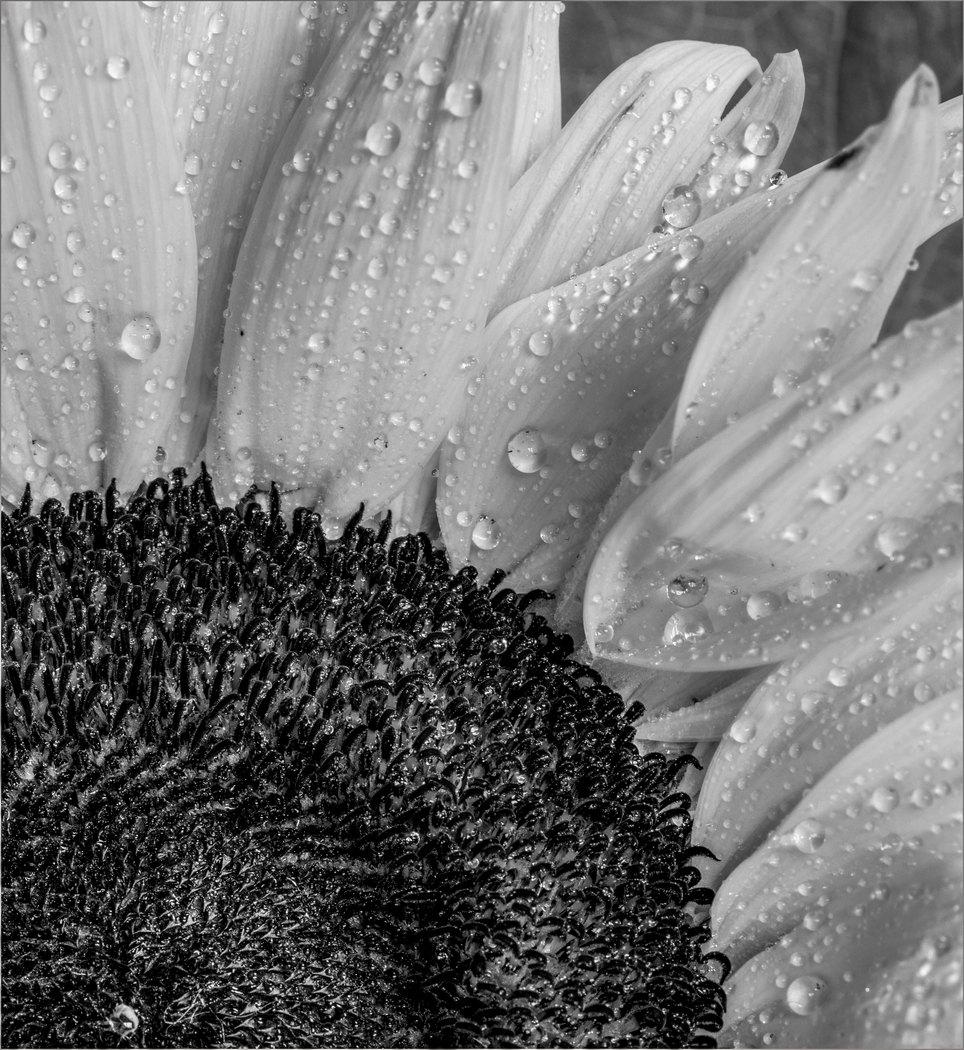 Sunflower Textures