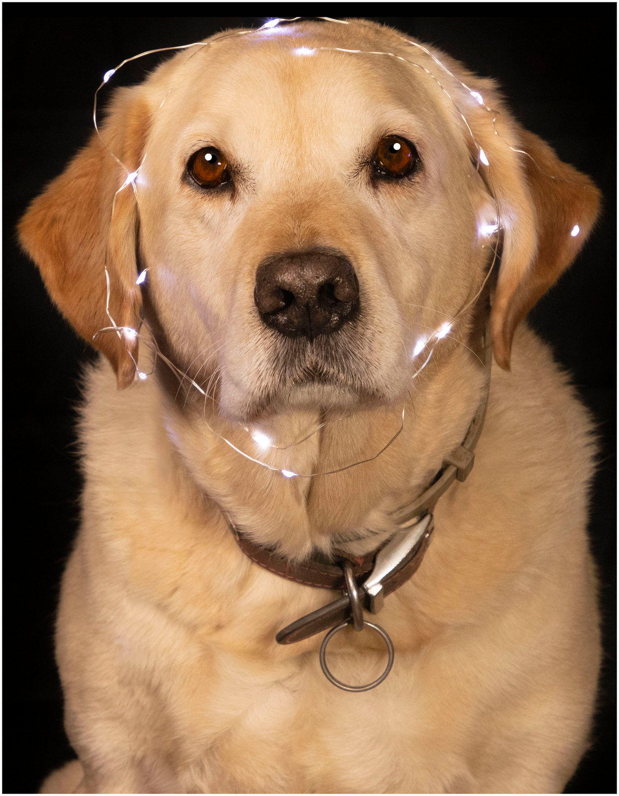 Bear with lights